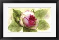 Framed Eden Rose Open Bud