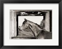 Framed Arab King (BW)