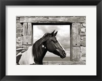 Framed Painted Horse (BW)