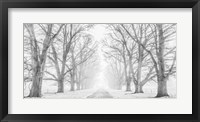 Framed Tree Lined Road in the Snow