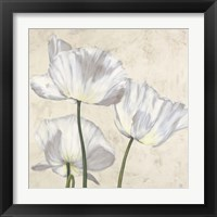 Framed Poppies in White II