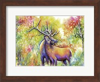 Framed Elk Love