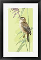 Framed Singing Sedge Warbler