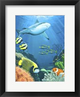 Framed Coral Reef