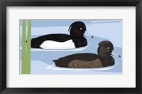 Framed Tufted Duck Id