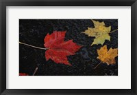 Framed Leaves of Color