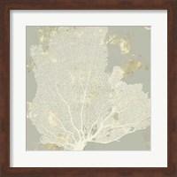 Framed Sea Coral I