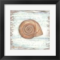 Framed Ocean Snail