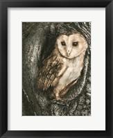 Framed Barn Owl Roost