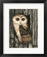 Framed Owl Sentry