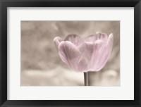 Framed Violet Tulip