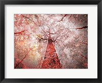 Framed Autumn Forest