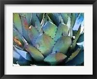 Framed Agave