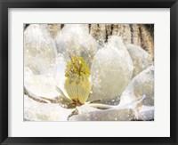 Framed Magnolia Tree