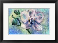 Framed Orchid Watercolor