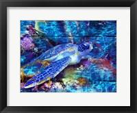 Framed Turtle