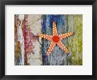 Framed Starfish 1