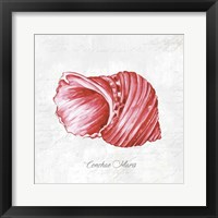 Framed Red Seashell
