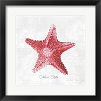 Framed Red Starfish
