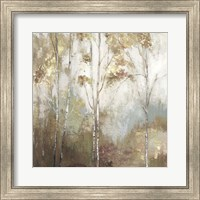 Framed Fine Birch II