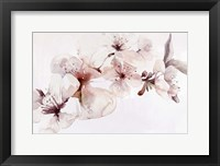 Framed Watercolor Blossoms I