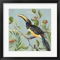 Framed Paradise Toucan II
