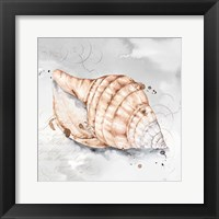 Framed Blush Shell I