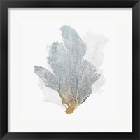 Framed Delicate Coral II