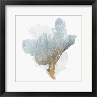 Framed Delicate Coral III