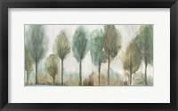 Framed Tall Trees