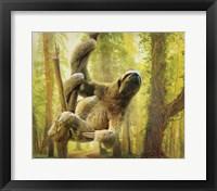 Framed Sun Soaker Sloth