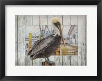 Framed Pelican Pride
