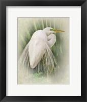 Framed Vintage Egret