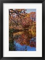 Framed Clove Lakes Park in Autumn B
