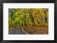Framed Clove Lakes Park in Autumn D