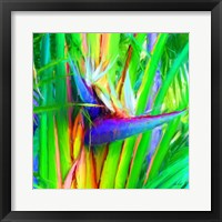 Framed Bird of Paradise 1