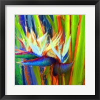 Framed Bird of Paradise 2