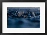 Framed Delight In Rain