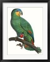Framed Parrot of the Tropics I