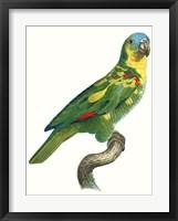 Framed Parrot of the Tropics II