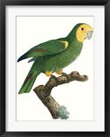 Framed Parrot of the Tropics IV