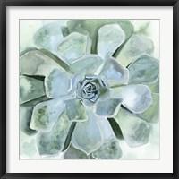 Framed Verdant Succulent III