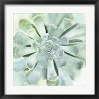 Framed Verdant Succulent IV