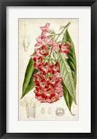 Framed Tropical Gems IV