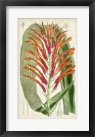 Framed Tropical Gems VI