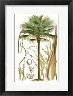 Framed Curtis Palms I