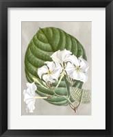 Framed Alabaster Blooms I