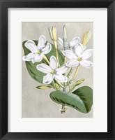 Framed Alabaster Blooms II
