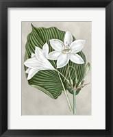 Framed Alabaster Blooms III