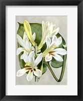Framed Alabaster Blooms IV